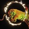 Цирки в Снежинске